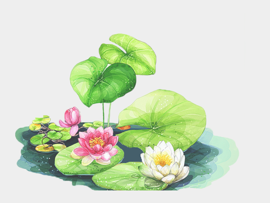 water lily clipart, Cartoons - Bud Drawing Water Lily - Birthday Card With Lotus Flower
