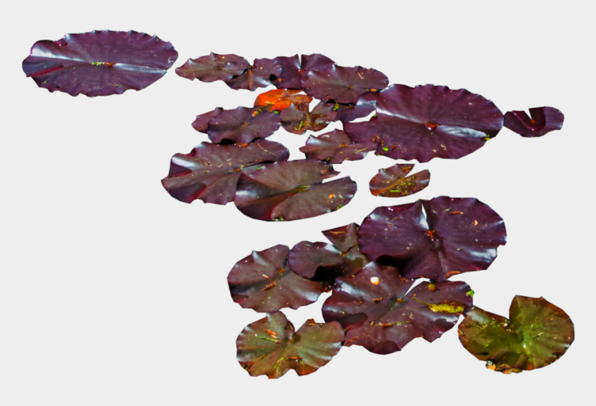water lily clipart, Cartoons - Water Lily Png , Png Download - Waterlilies Png