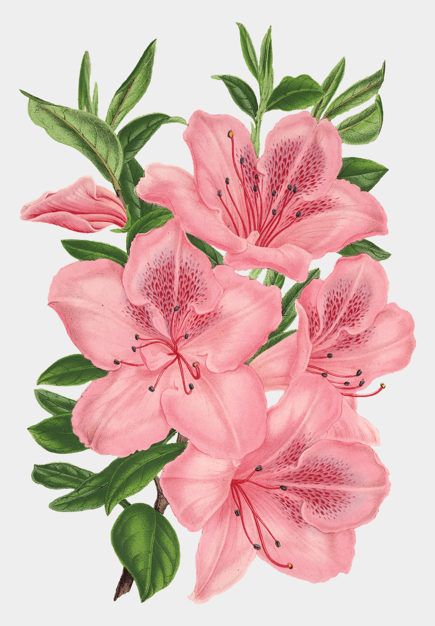 lily flower clipart, Cartoons - Lily Clipart Flower Bunch - Flower Drawing Transparent Background