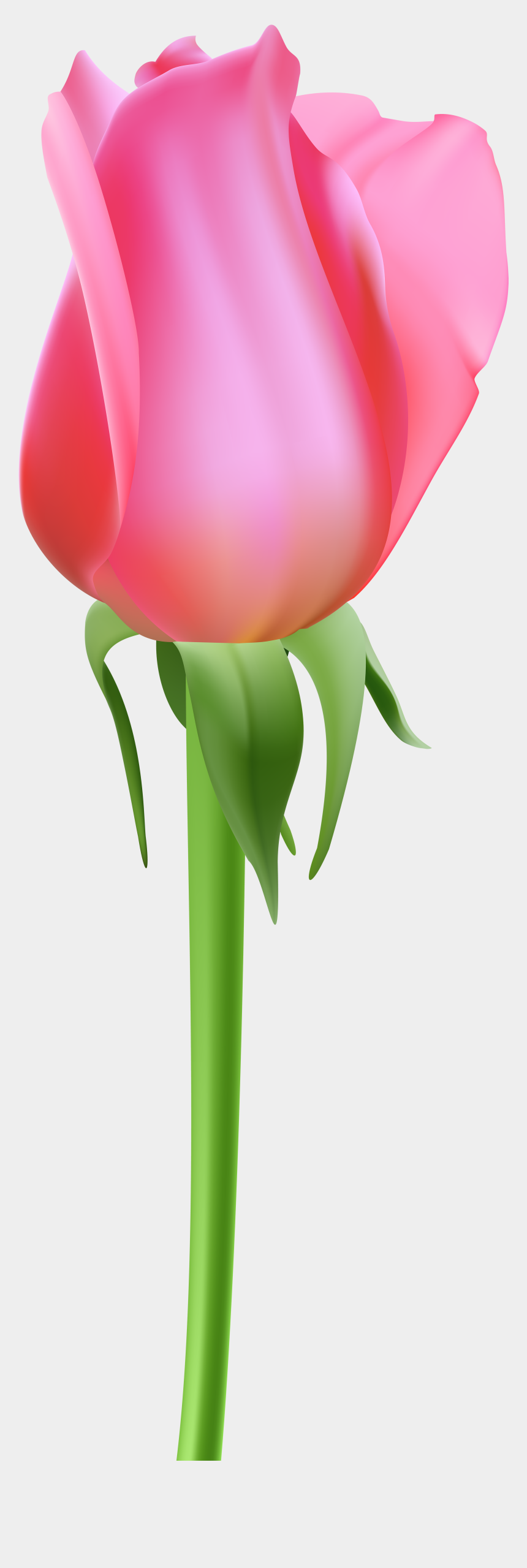 rose bud clipart, Cartoons - Rose Bud Pink Transparent Clip Art - Portable Network Graphics
