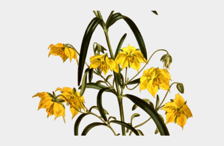 flower petal clipart, Cartoons - Petal Clipart Loose Flower - Sunflower