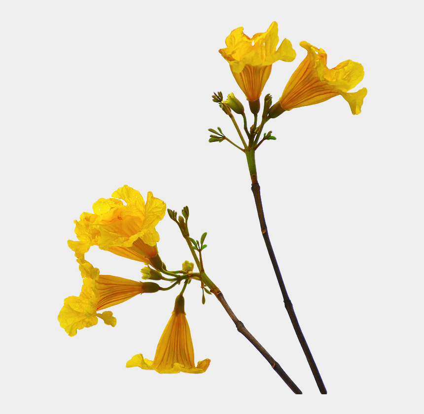 flower stem clipart, Cartoons - Flower Png Free Download - Flowers With Stem Png
