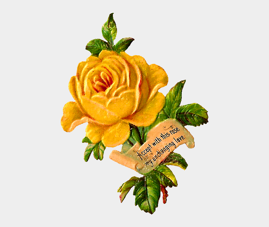 yellow rose clipart, Cartoons - Yellow Rose Clip Art - Yellow Flower Vintage Png