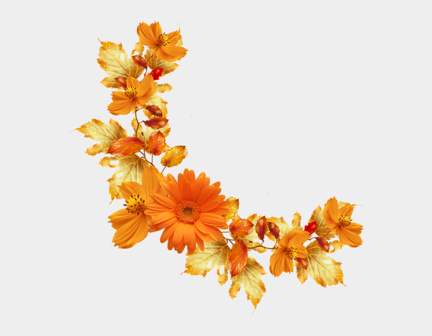 autumn flowers png fall borders png - transparent background orange flowers png