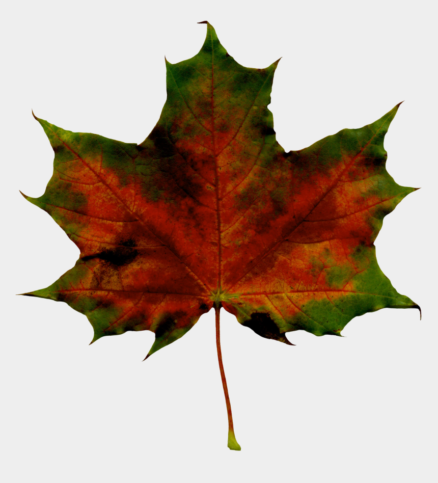 free clipart autumn leaves, Cartoons - Fall Image Free Download Best On Clipartmag Ⓒ - Maple Leaf