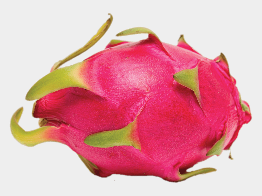 dragon fruit clipart, Cartoons - Fruits - Fresh Dragon Fruits