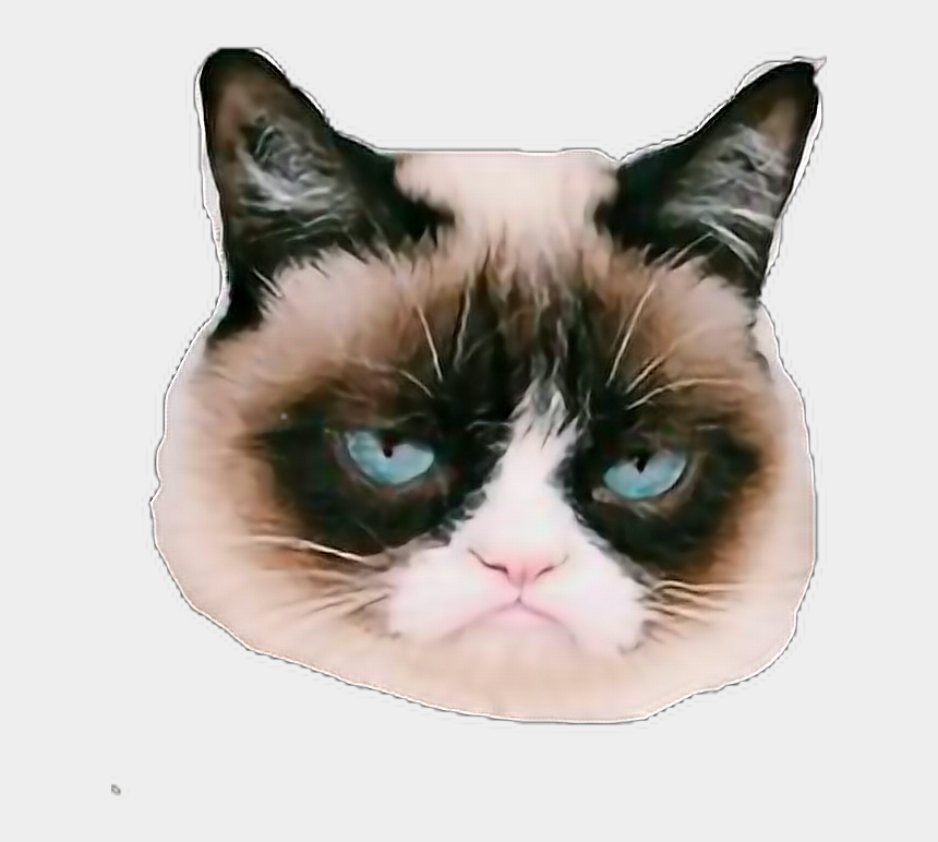 grumpy cat clipart, Cartoons - Grumpycat Sticker - Funny Dog Memes With Curse Words