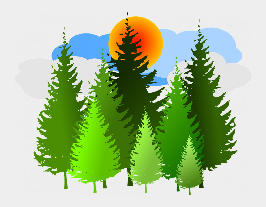 forest fire clipart, Cartoons - Forest Clipart Free Spruce Forest Conifer Free Vector - Pine Trees Clip Art