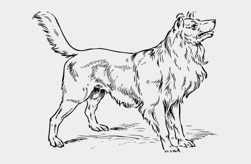 black dog clipart, Cartoons - Big Dog Clipart - Realistic Dog Colouring Pages