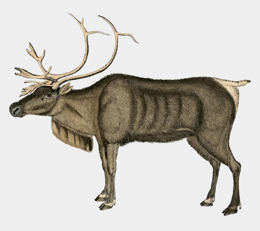 weihnachtsbilder clipart, Cartoons - Deer Clipart Vintage - Vintage Moose Illustration Christmas