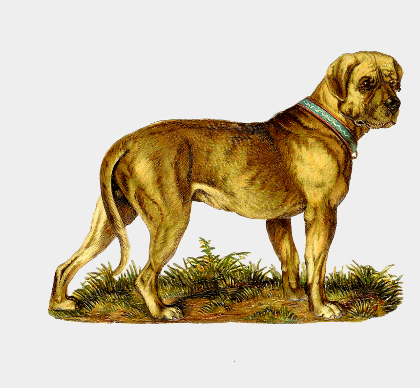 great dane clipart, Cartoons - Here's A Great Bit Of Dog Clip Art Great Dane To Be - Victorian Dog Png