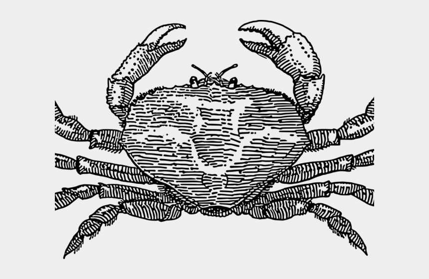 hermit crab clipart, Cartoons - Crustacean Clipart Horseshoe Crab - Soft Shell Crab Drawing