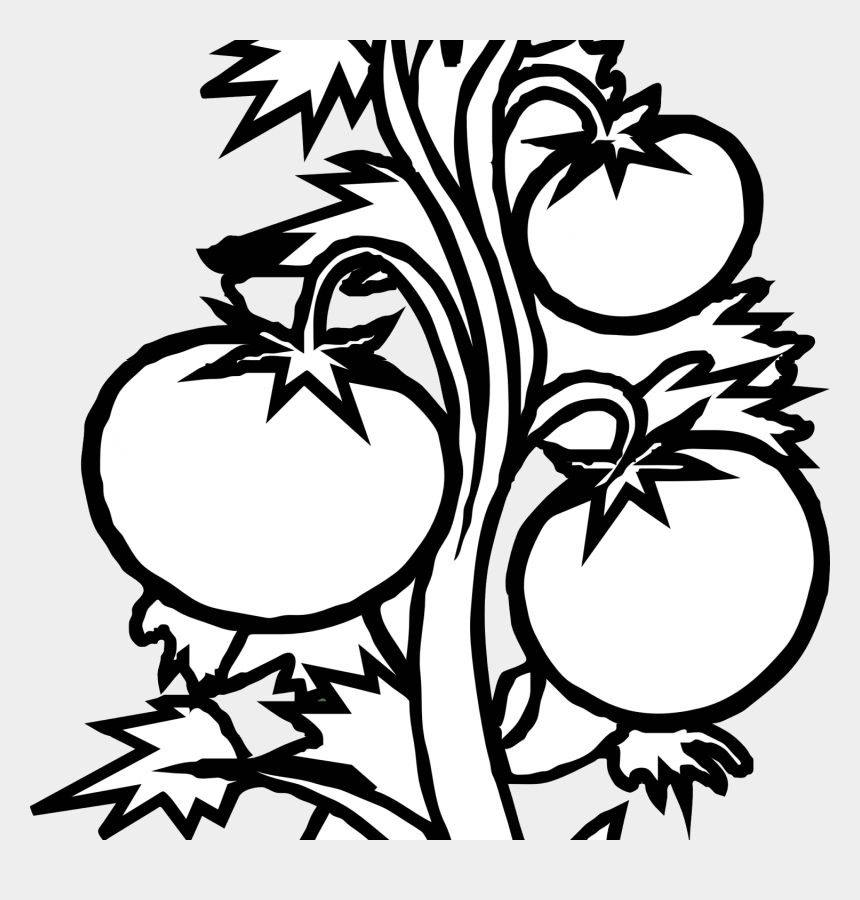 watermelon clipart black and white, Cartoons - Plant Clipart Black And White - Tomato Plant Clipart Black And White