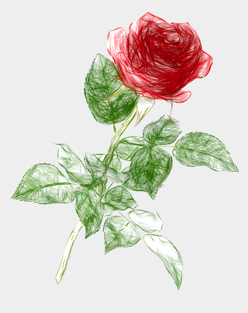 draw clipart, Cartoons - Drawing Pencil Color Rose Png Clipart Picture - Rose Drawing Png