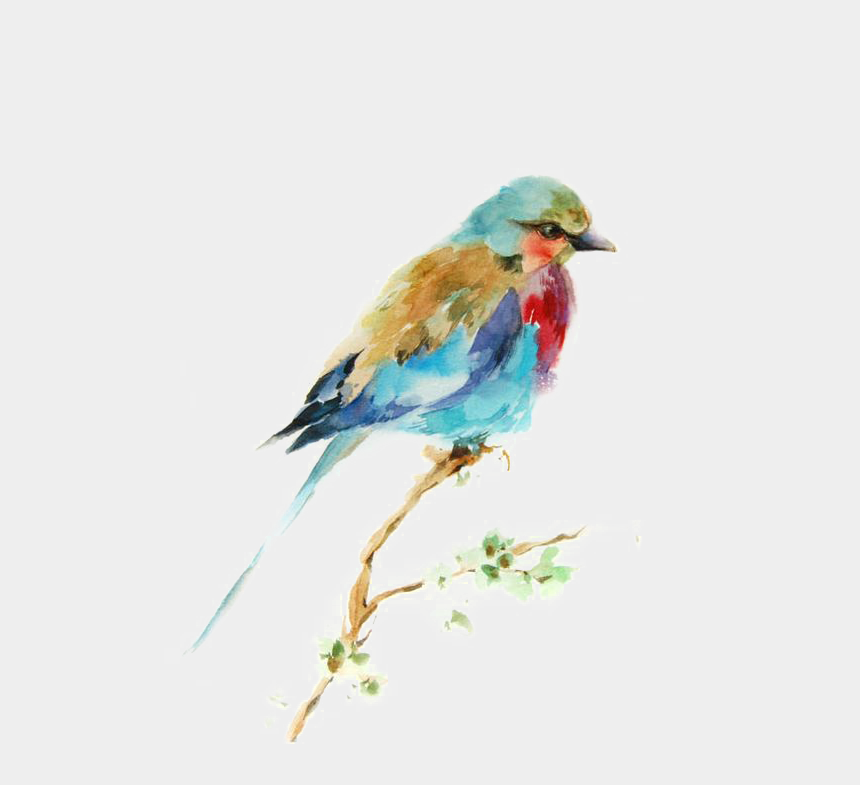 bird clipart images, Cartoons - Bird Watercolor Printmaking Drawing Painting Birds - Best Watercolor Paintings Of Bird