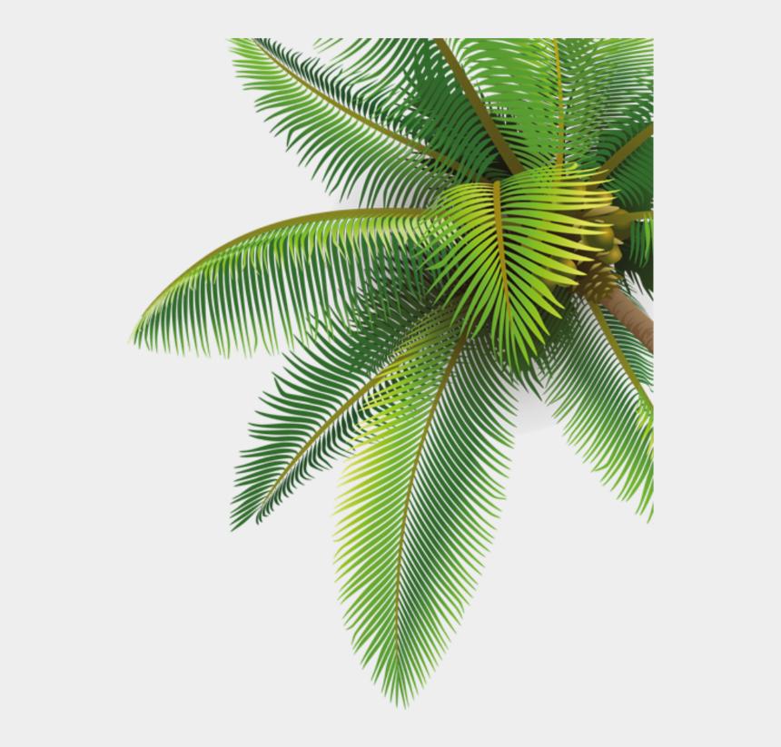 palme clipart, Cartoons - #palme - Hd Coconut Tree Png