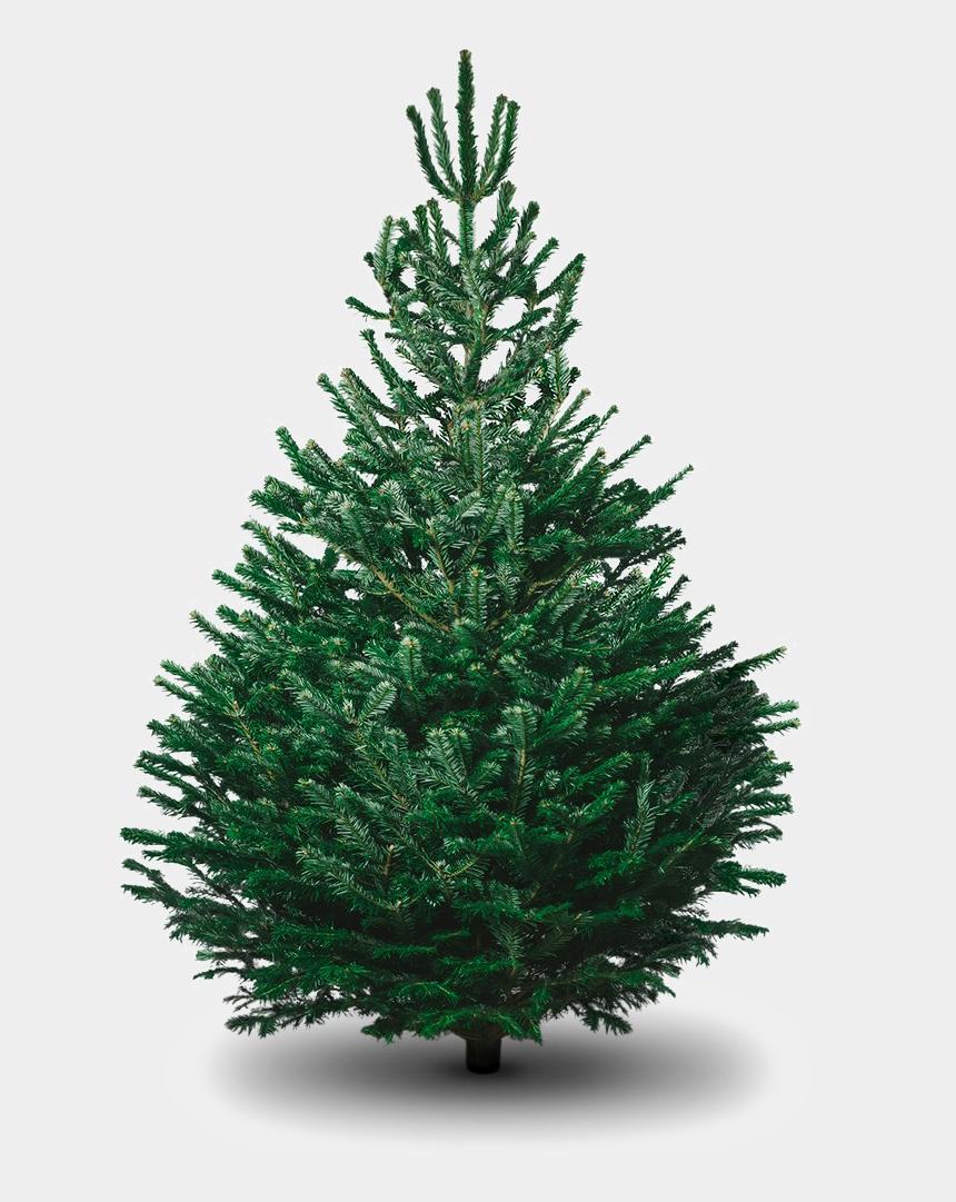 tannenbaum clipart, Cartoons - Evergreen Tree Png - Nordmann Fir Tree