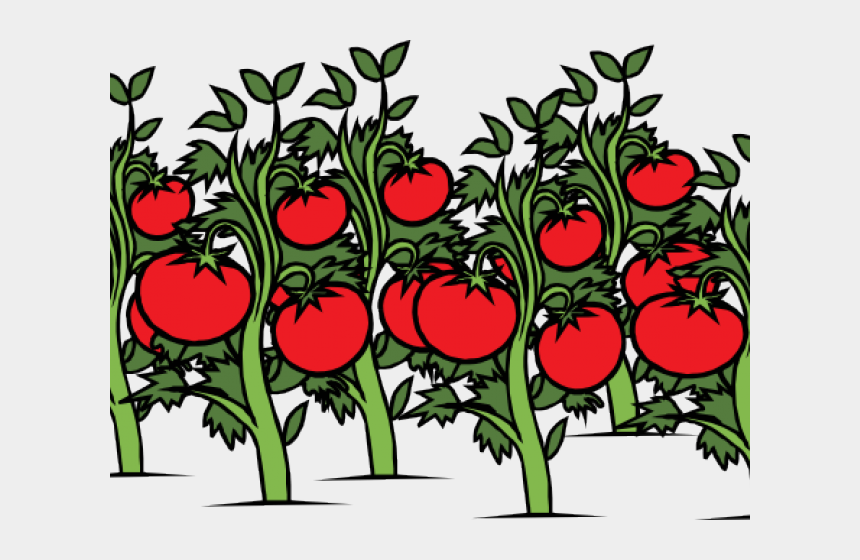 different clipart, Cartoons - Tomato Clipart Different Kind Plant - Cartoon Image Of Tomato Plant
