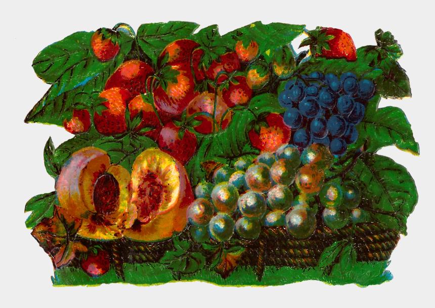 fruit clip art, Cartoons - Digital Fruit Clip Art Downloads - Seedless Fruit
