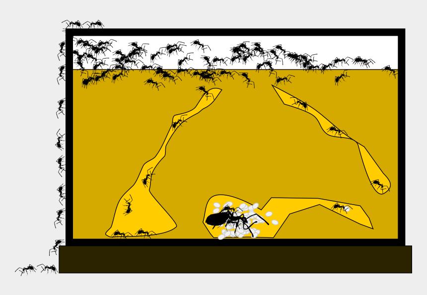 ant clip art, Cartoons - Ant Clipart Ant Farm - Ant Farm Clipart Png