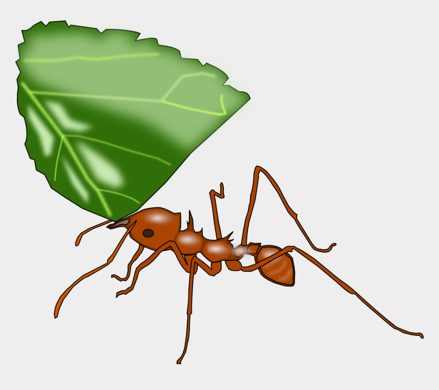 ant clip art, Cartoons - Atta Ant - Leaf Cutter Ant Clipart