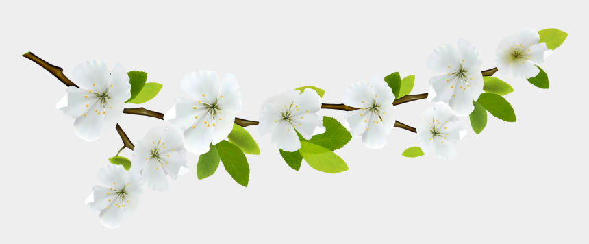 spring flower clipart, Cartoons - Branch White Png Gallery Yopriceville High View Ⓒ - Transparent Background Spring Flowers Png