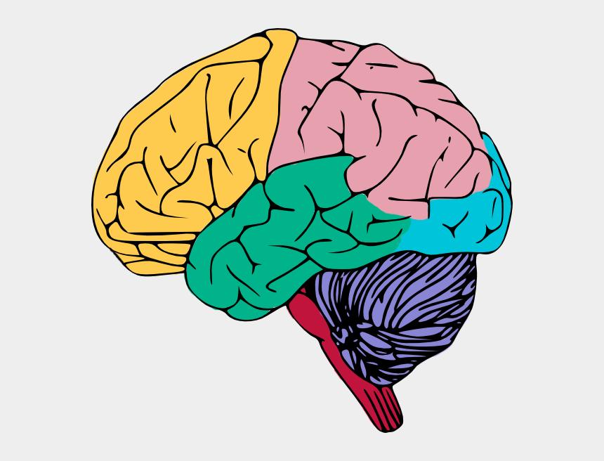 brain clip art, Cartoons - Free Colorful Brain Clip Art - Clip Art The Brain