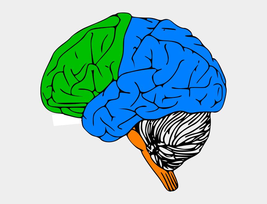 brain clip art, Cartoons - Luria Brain Clip Art - Black And White Brain Transparent