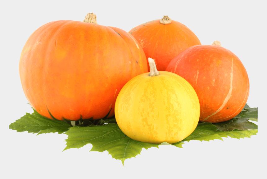 pumpkins clipart, Cartoons - Pumpkins Clipart - Pumpkin Png Transparent