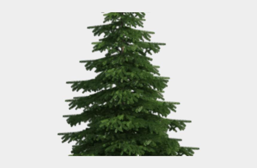 evergreen tree clipart, Cartoons - Fir Clipart Long Tree - Pine Tree No Background