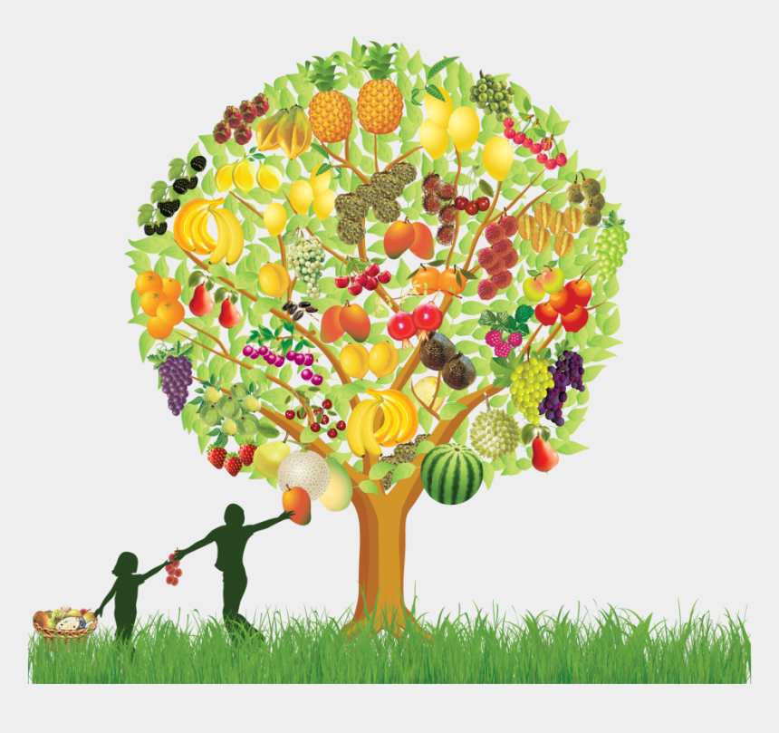 fruit tree clipart, Cartoons - Fruit Tree , Png Download - Fruit Tree Clipart Png