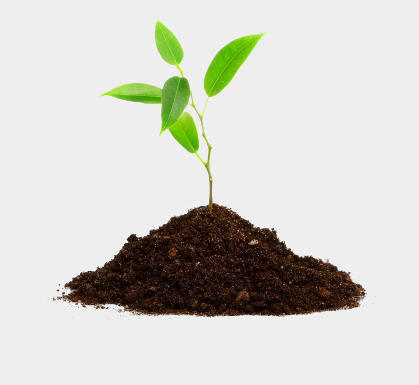 planting trees clipart, Cartoons - Planting Trees Png - Bio Fertilizers