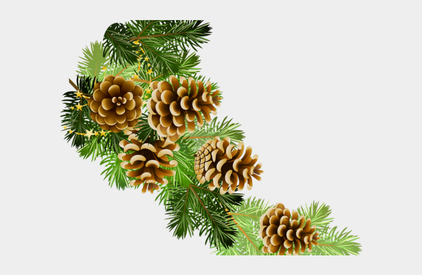 winter tree clipart, Cartoons - Pine Cone Clipart Winter - Christmas Transparent Background Free