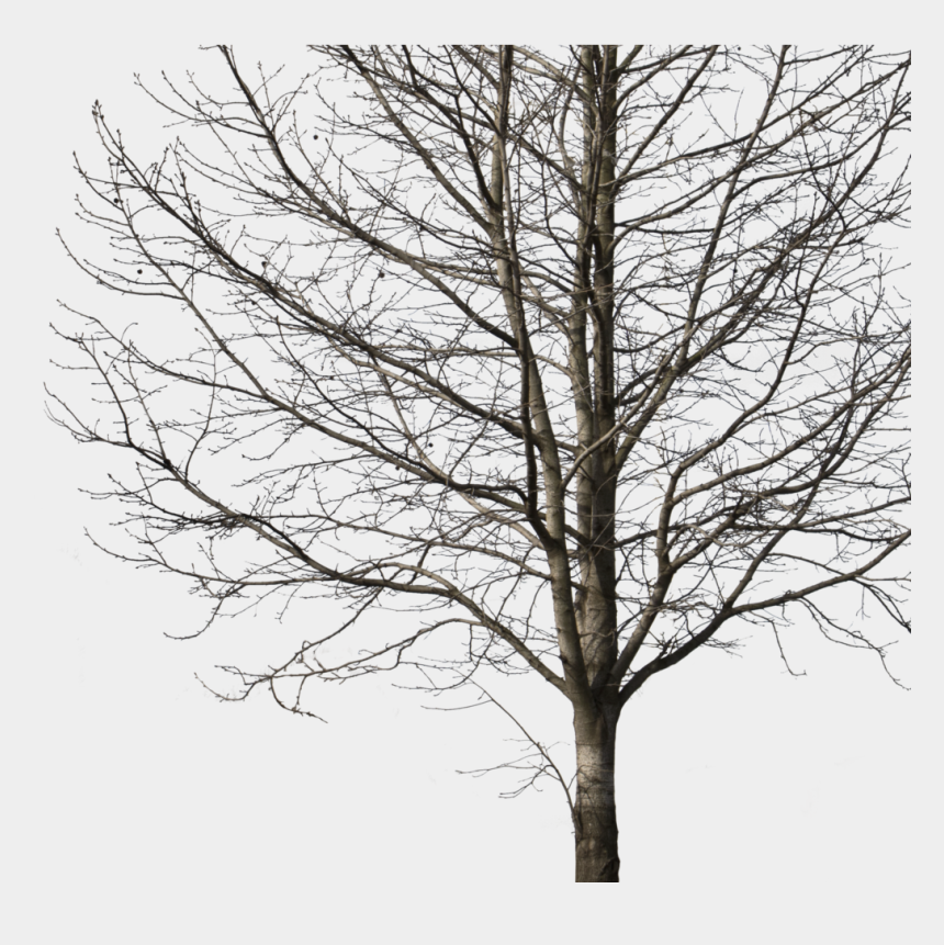 winter tree clipart, Cartoons - Deciduous Tree Winter I Cutout Trees Png Deciduous - Winter Tree Cut Out Png