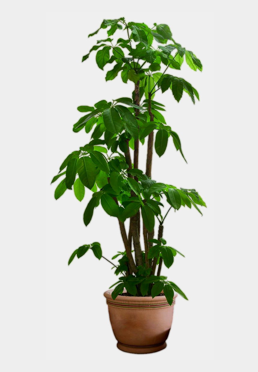 planting trees clipart, Cartoons - Small Plant Png - House Plant Transparent Background