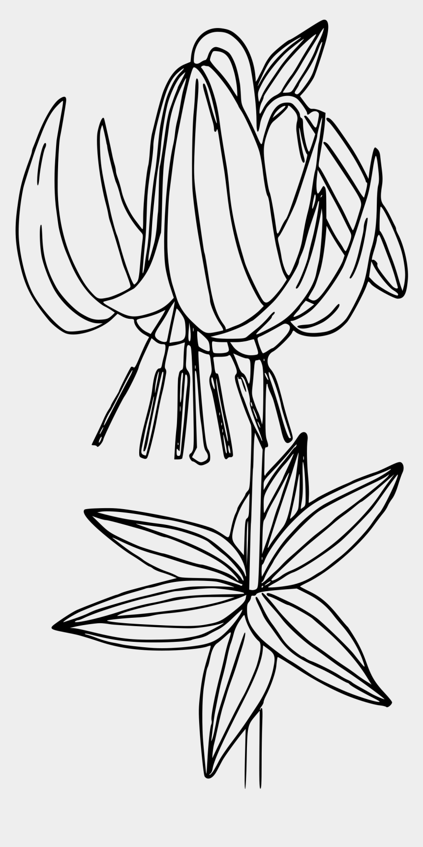 sego lily clipart, Cartoons - Lily Clipart Black And White - Bleeding Heart Flowers Drawing Line