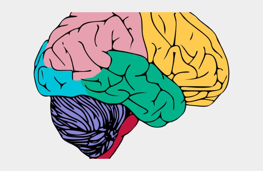 clipart of human, Cartoons - Brain Clipart Human Brain - Nervous System Brain Clipart