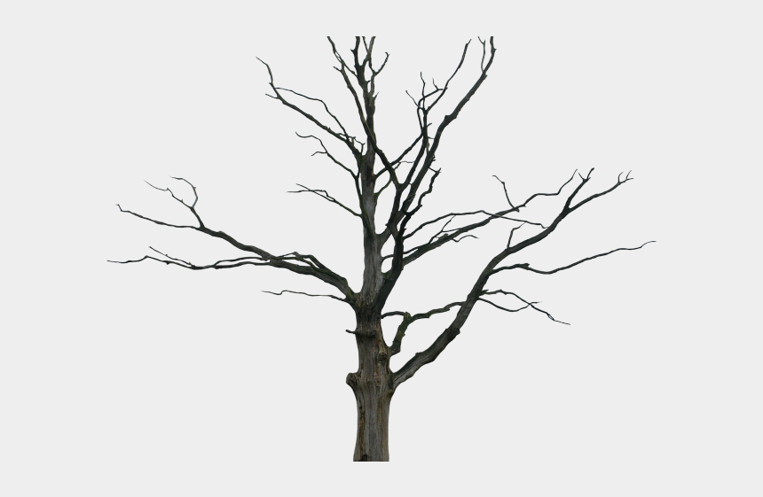 dead wolf clipart, Cartoons - Drawn Dead Tree Detailed - Dead Tree Transparent Background
