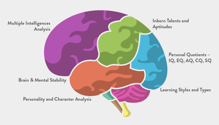 multiple intelligences clipart, Cartoons - Cognigo's Multiple Intelligences Report Provides You - Multiple Intelligences Brain Diagram
