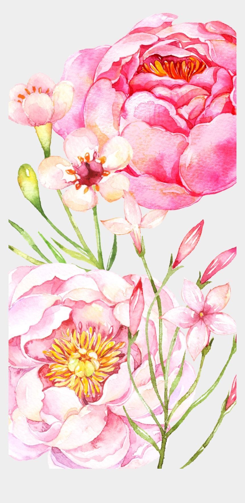 pink peony clipart, Cartoons - #casetify #iphone #art #design #flowers #floral - Common Peony
