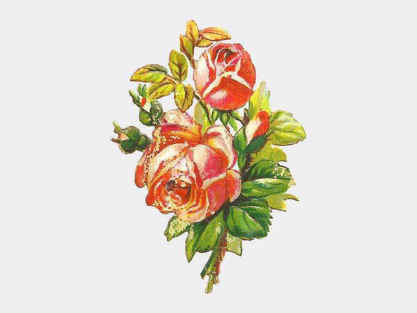 antique flowers clipart, Cartoons - Free Flower Clip Art - Portable Network Graphics