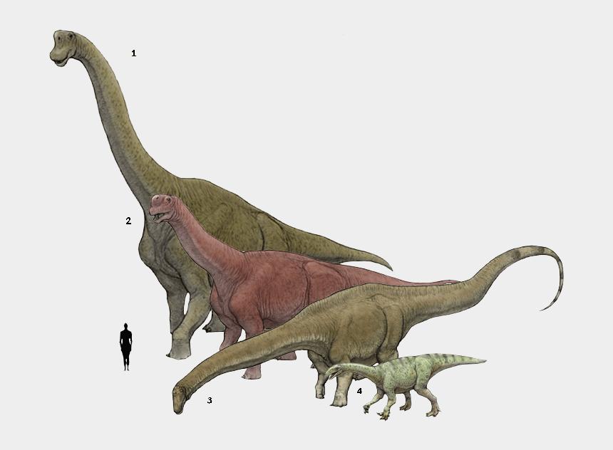dinosaur scene clipart, Cartoons - Camarasaurus Diplodocus
