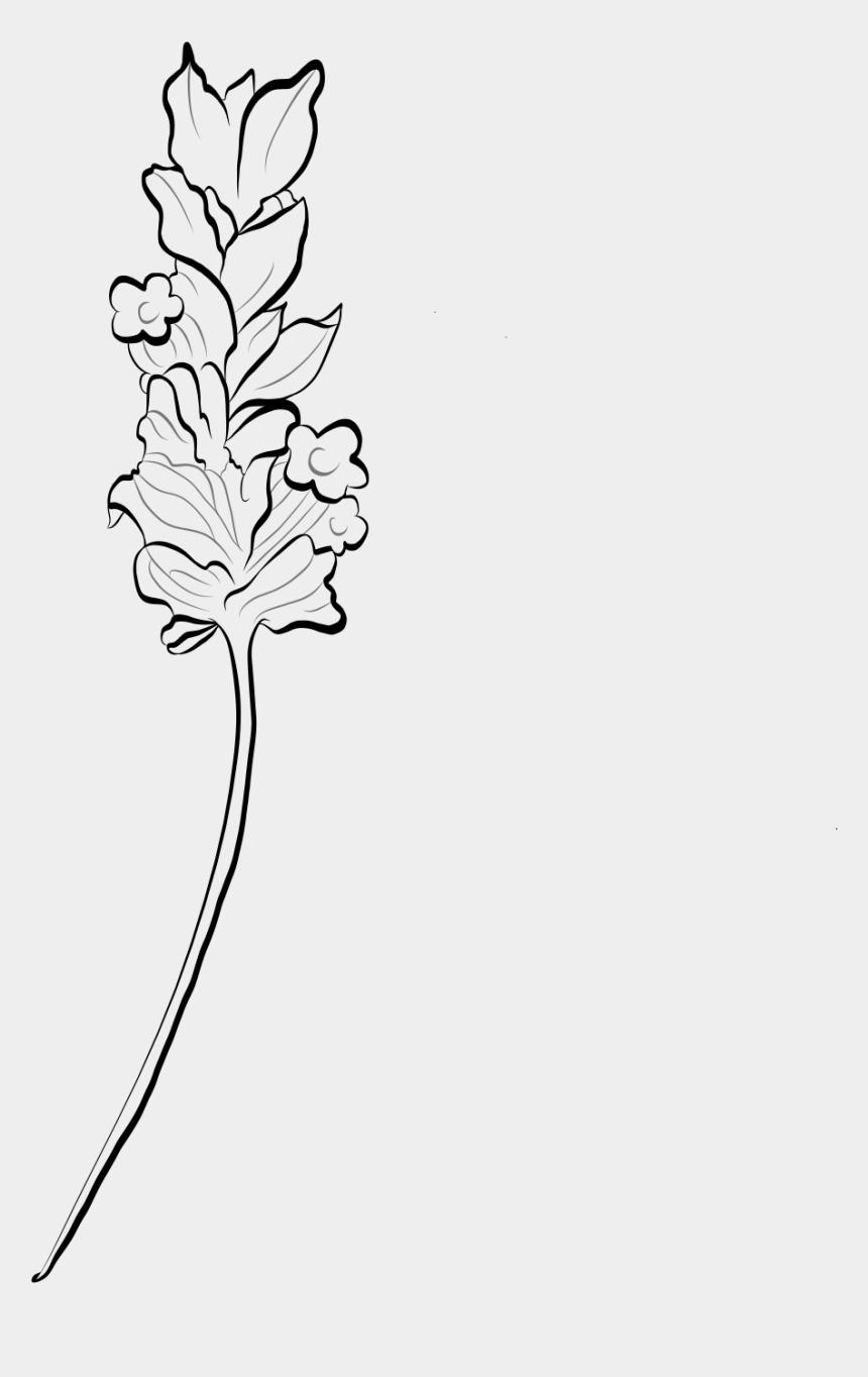 lavender flowers clipart, Cartoons - Lavender Bush Png - Line Art