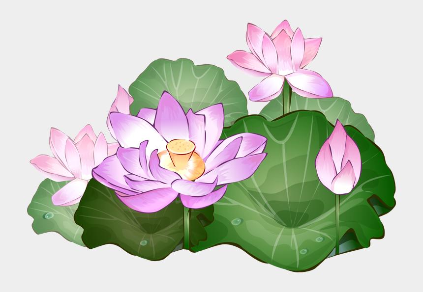 vase clipart, Cartoons - Pin Vase Clipart Lotus Flower - Transparent Background Lotus Flowers Png