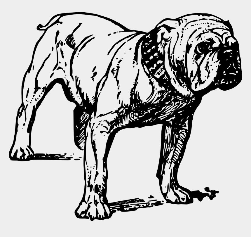 pitbull clipart, Cartoons - French Bulldog Bull Terrier Pit Bull Drawing - Bulldog Vector