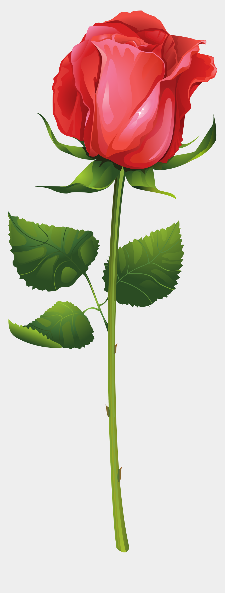 stem clipart, Cartoons - Rose With Stem Png Clip Art Imageu200b Gallery Yopriceville - Red Rose Illustration Vector