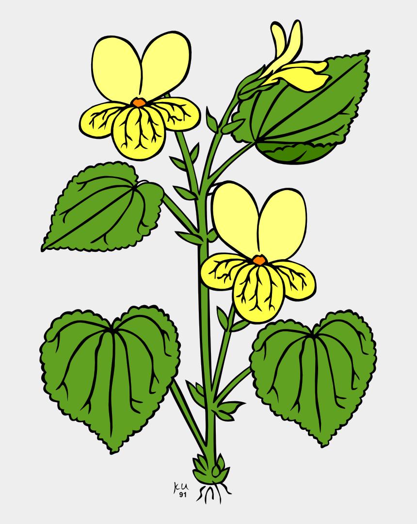 stem clipart, Cartoons - Flowering Plant Plants Plant Stem Leaf - Plant With Flower Clipart