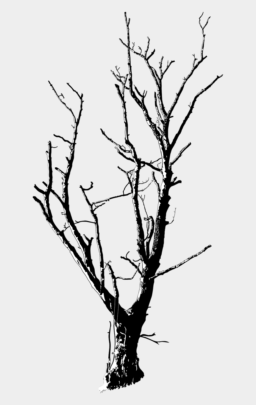 stem clipart, Cartoons - Twig Black And White Branch Tree Plant Stem - Dead Tree Png Transparent