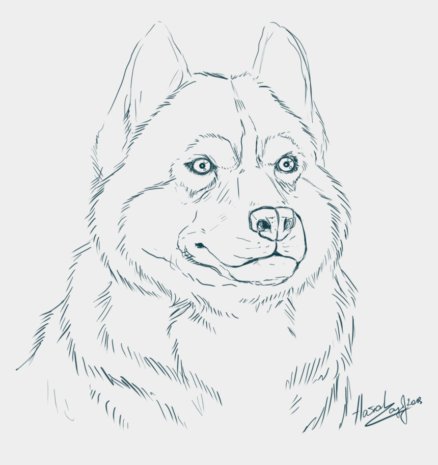 - Cool Cute Husky Coloring Pages Siberian 14824 - Alaskan Malamute Coloring  Pages, Cliparts & Cartoons - Jing.fm