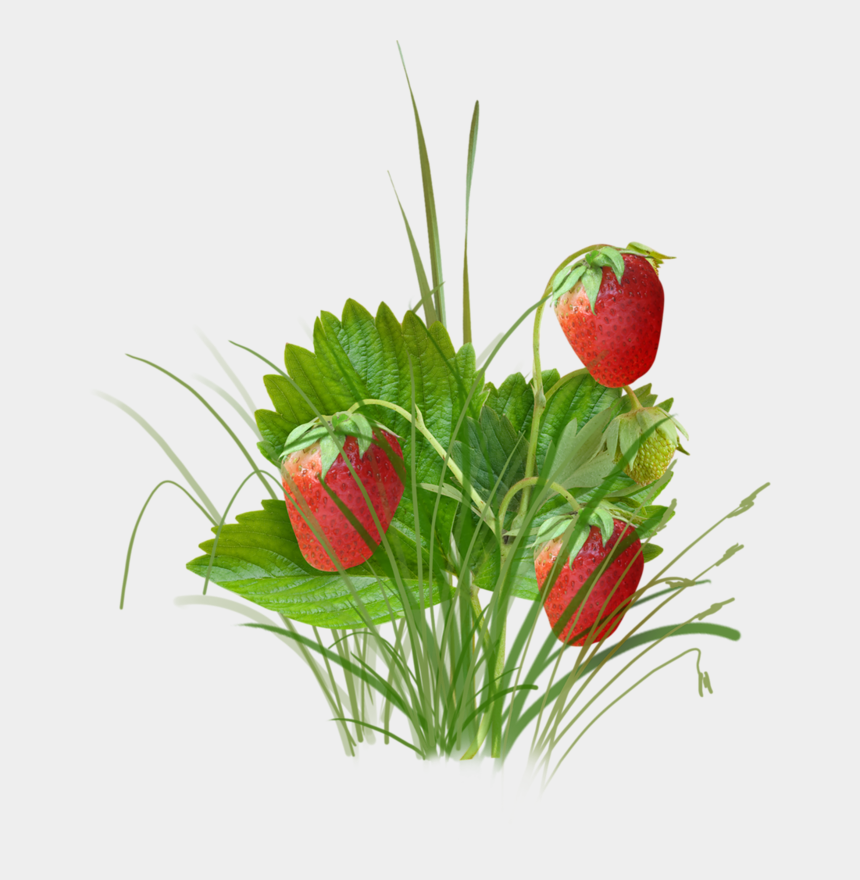 strawberries clipart, Cartoons - Fresh Strawberry Fruit - Strawberry